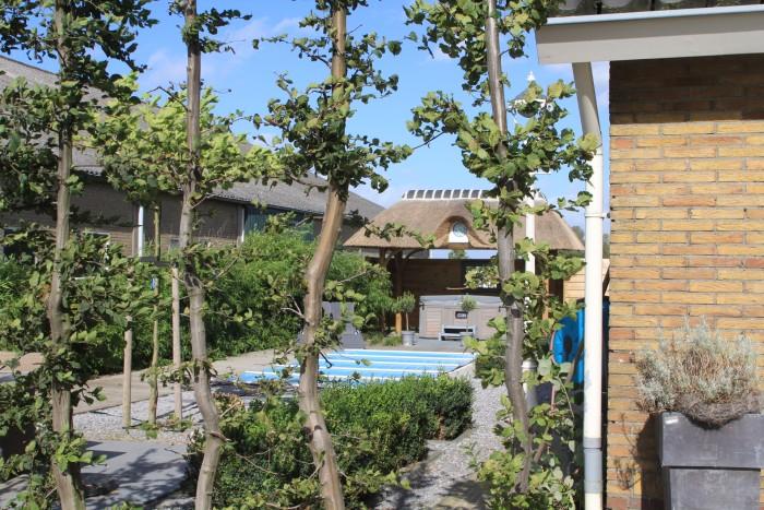 Patio Tuininrichting Dronten Beplanting Tuinhuisjes Zwembaden Veranda's